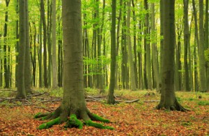 Forest for the trees - how to get the most out of your headhunter